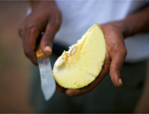 Breadfruit being sliced