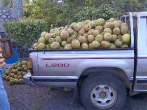 truck with breadfruit A